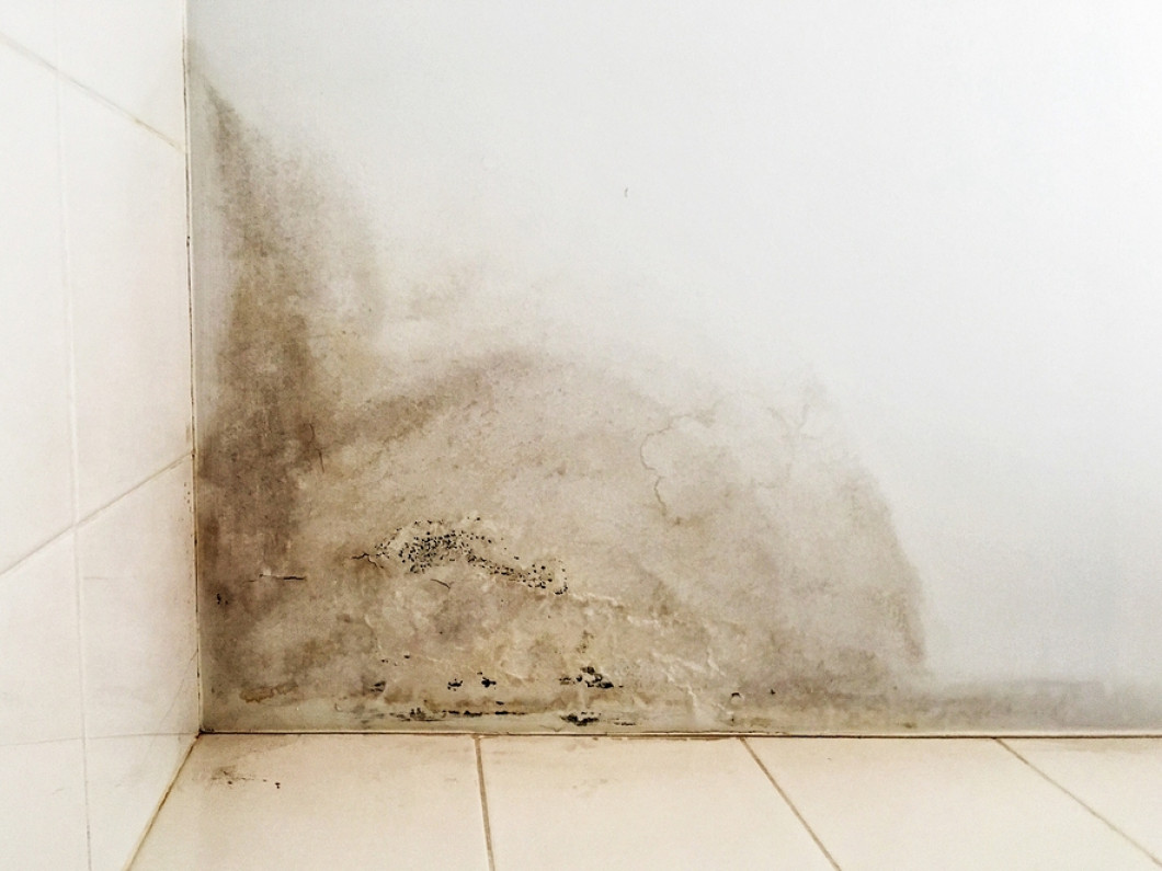 Stop the Spread of Mold in Your Home or Business